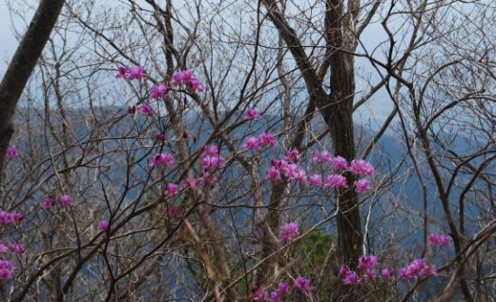生藤山のお花