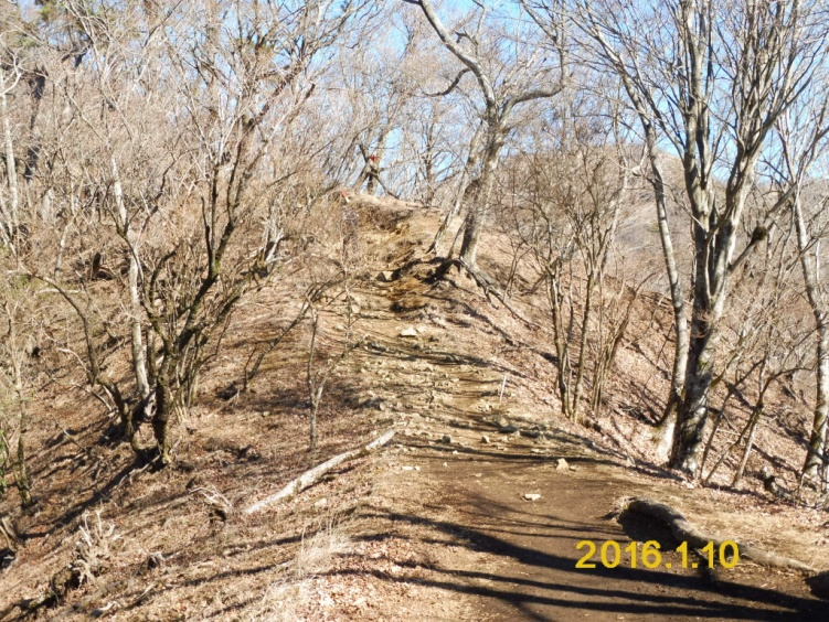 D:\横浜ハイキングクラブ\YHC2015年山行報告書\160110 四季報、鍋割山感想文用写真\2.頂上近くのブナ林の登山道.JPG
