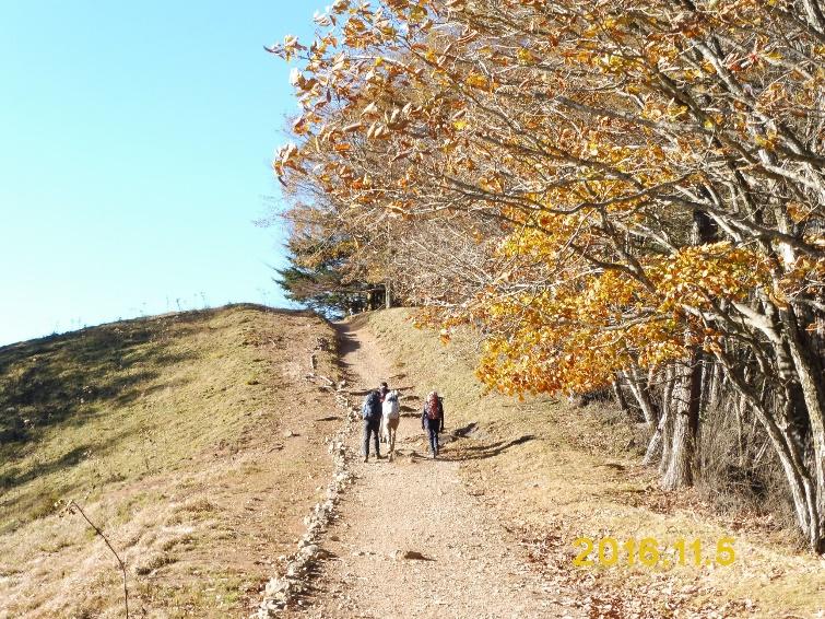 D:\横浜ハイキングクラブ\YHC2016年山行報告書\161105-06 四季報、雲取山\四季報、雲取山写真\1.ブナ坂から小雲取山への登山道 - コピー.JPG