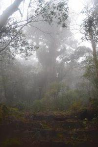 森の中を歩いている人の絵 低い精度で自動的に生成された説明