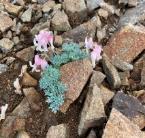 岩の上にいろいろな花  中程度の精度で自動的に生成された説明